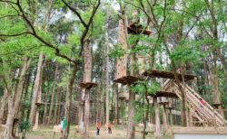 【フォレストアドベンチャー】大人だって自然の森で冒険したい! | 全国各地