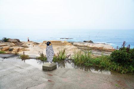 【千畳敷】雄大な岩畳を鑑賞しながら潮風に吹かれる | 西牟婁郡白浜町