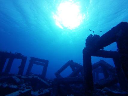 【ダイビングサービスコナン(Conan)】魚! ウミガメ! 座間味島で海の生物を観測せよ!| 座間味村