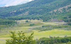 【Patagonia Bagual】野生の馬に会えるかも? 広大で割と過酷なハイキング | 南パタゴニア