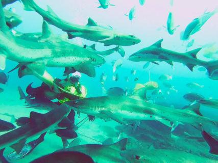 【伊戸ダイビングサービスBOMMIE】数百のサメの群れに囲まれて大ピーンチ……? シャークスクランブルが体験できちゃうダイビング | 館山市伊戸