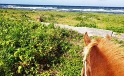 【久米島馬牧場】まさかここまでの乗馬体験が日本でできるとは!久米島馬遊び| 久米島町